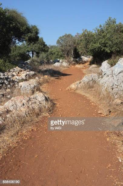 A dirt road among the rocks at Mount Tabor, with Mount Tabor oaks