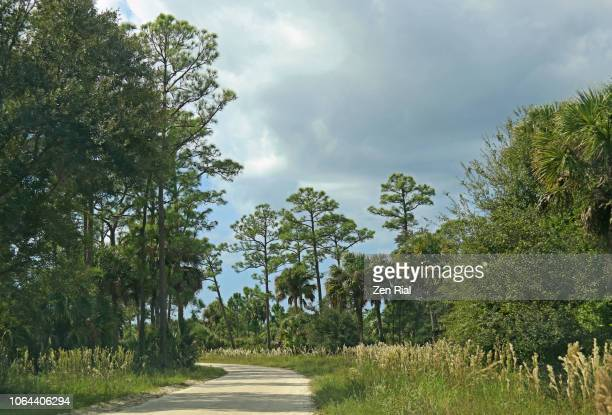 dirt road and different vegetation in dupuis management area, florida - 林 ストックフォトと画像