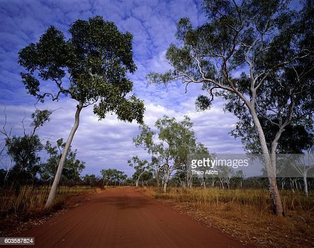 Dirt road and eucalypt forest, Purnululu National Park, Western Australia, Australia