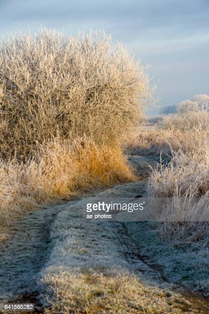 Dirt road and frozen bushes at pasture in morning light