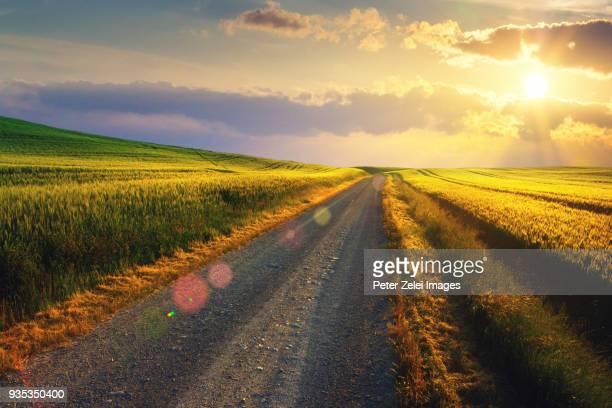 dirt road at sunset in tuscany - 散歩道 ストックフォトと画像