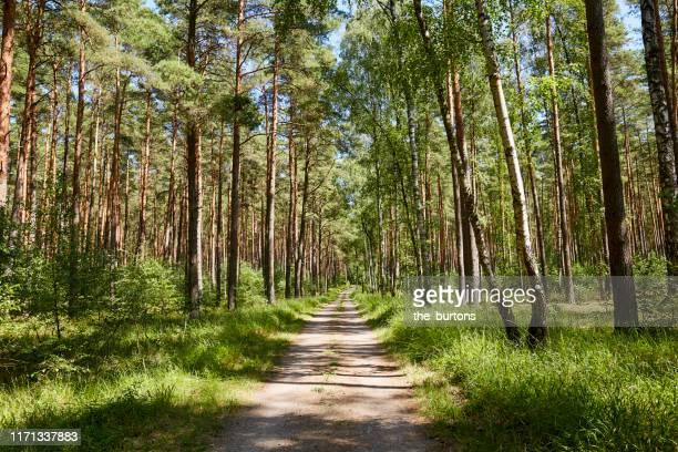 dirt road, bicycle lane and footpath through a forest in summer - fluchtpunkt stock-fotos und bilder
