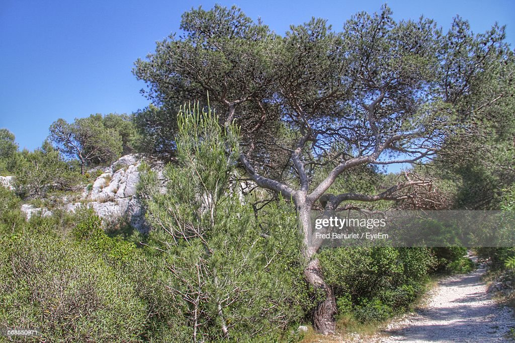 Dirt Road By Trees Against Sky : Stock Photo
