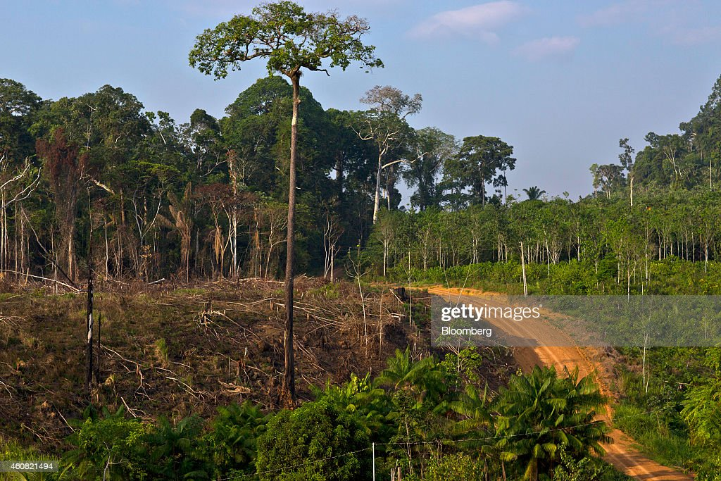 Logging Operations As Government Says Amazon Deforestation Slowing : News Photo