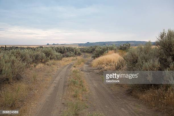 a dirt road in farm country - sagebrush stock pictures, royalty-free photos & images