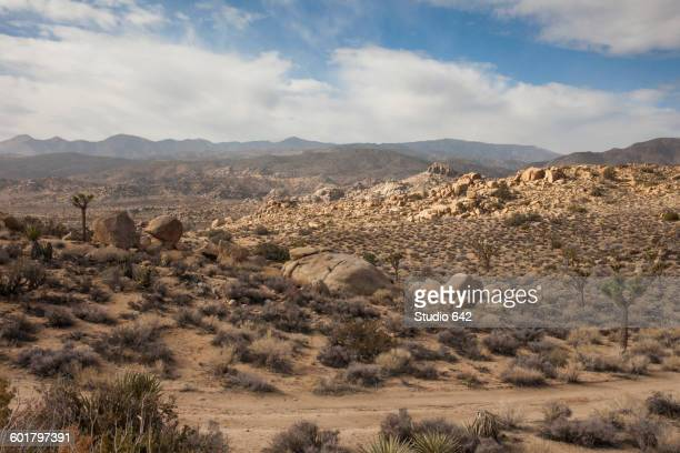 Dirt road in remote desert landscape