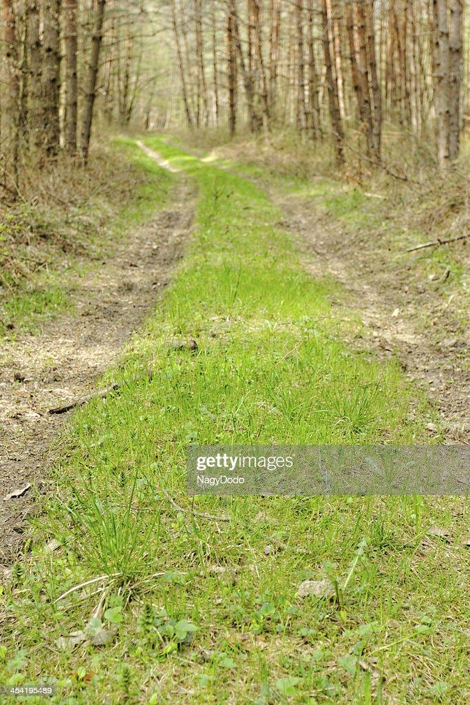 Carretera de tierra en el bosque : Foto de stock