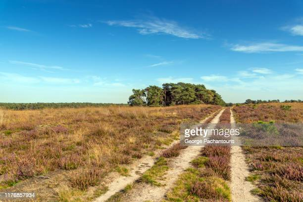 dirt road in the nature - gelderland stock pictures, royalty-free photos & images