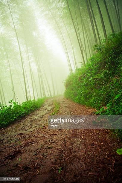 Schotterstrecke führenden bis foggy forest