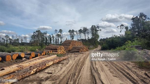 dirt road leading towards trees against sky - deforestation stock pictures, royalty-free photos & images