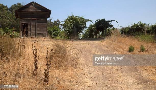 dirt road leading up to an abandoned shack and rows of grapevines - timothy hearsum - fotografias e filmes do acervo