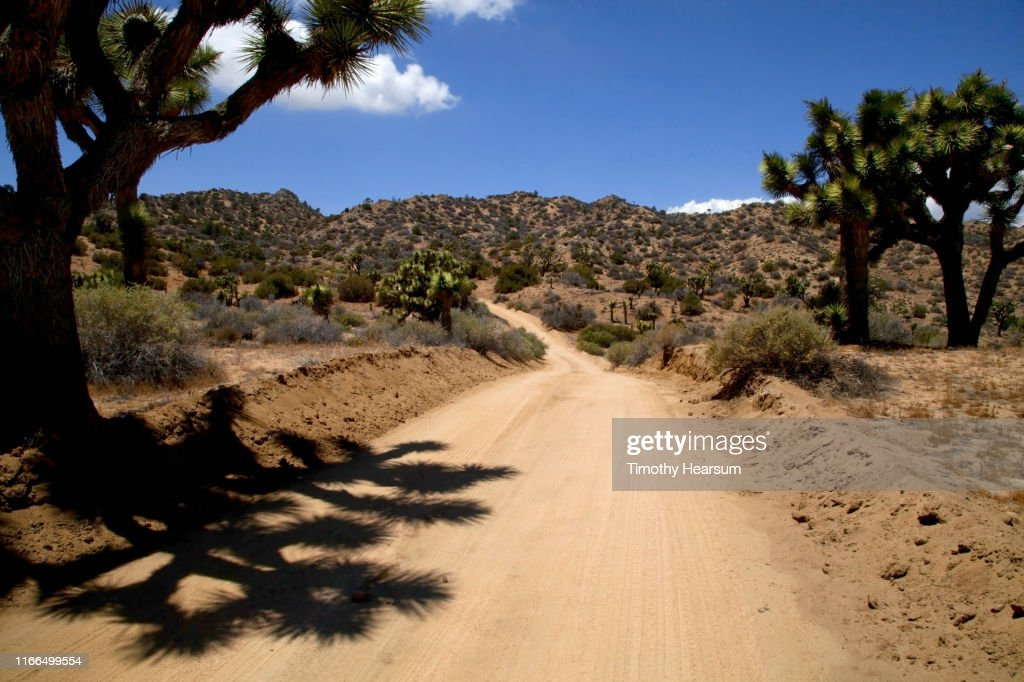 Dirt road lined with Joshua Trees and their shadows; mountains beyond : Stock Photo