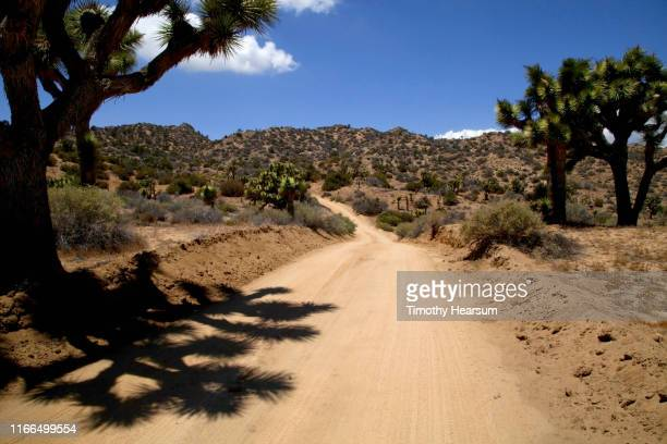 dirt road lined with joshua trees and their shadows; mountains beyond - timothy hearsum stock-fotos und bilder
