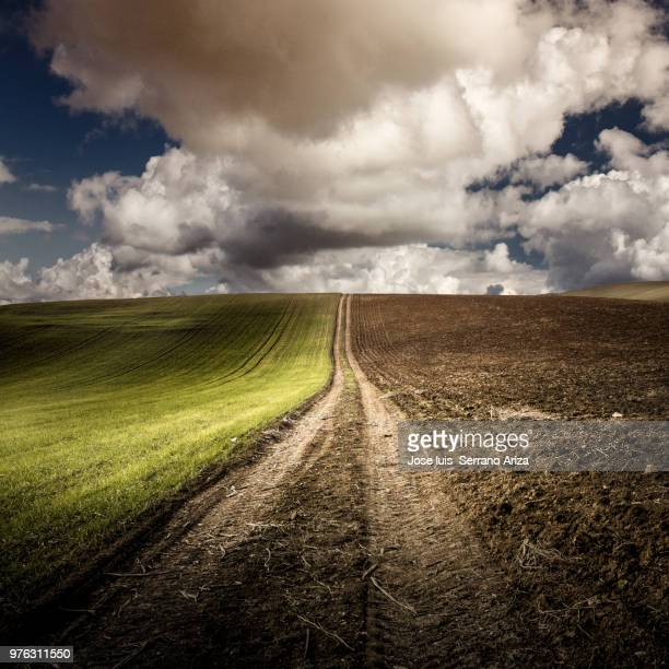 Dirt road on edge of field, Baena, Spain