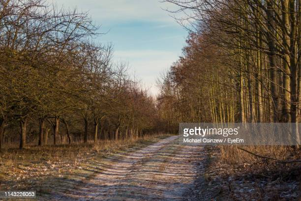 dirt road passing through forest - kahler baum stock-fotos und bilder