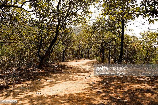 Dirt Road Passing Through Forest