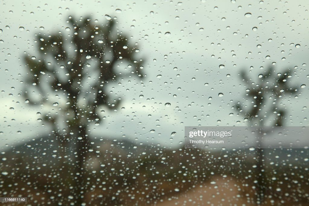 Dirt road running between two Joshua Trees as seen through a rain splattered windshield : Stock Photo