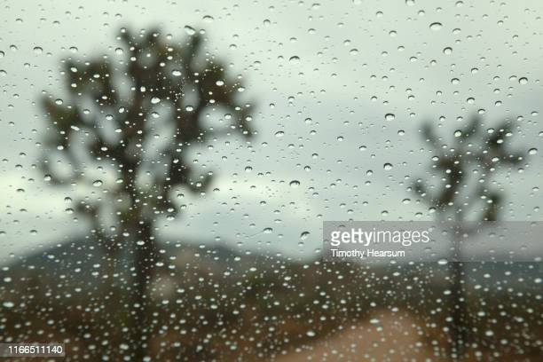dirt road running between two joshua trees as seen through a rain splattered windshield - timothy hearsum stock photos and pictures
