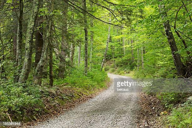 Schotterstrecke durch dichten Wald