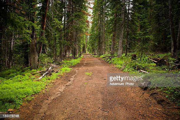 Chemin de terre à travers forêt enchantée
