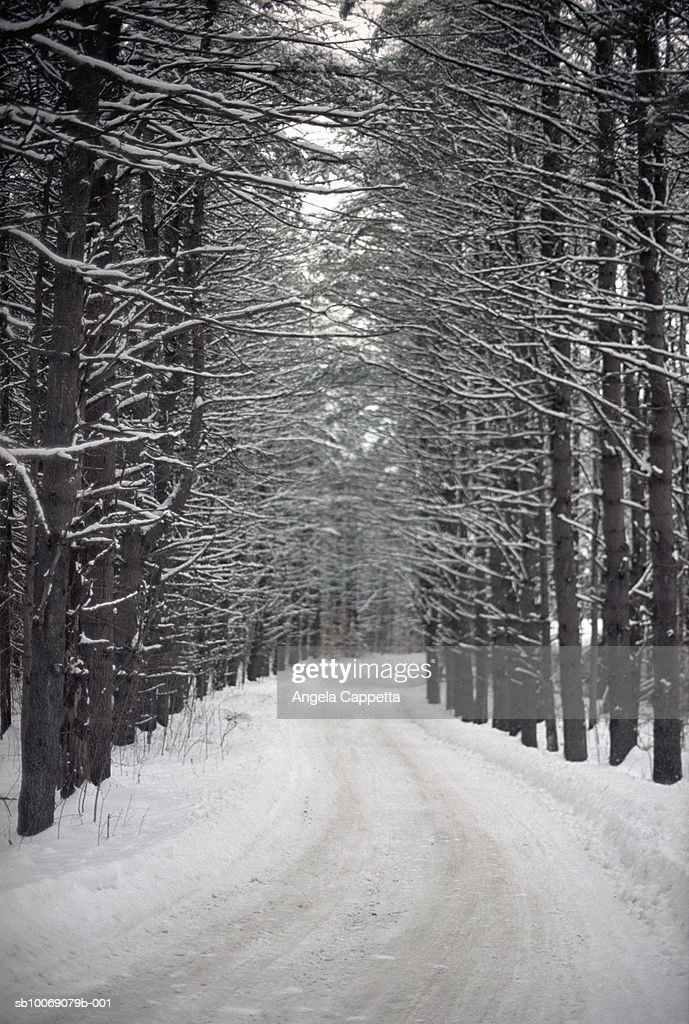 Dirt road through forest in winter : Stockfoto