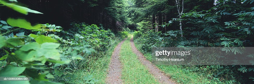 Dirt road through green forest : Foto stock