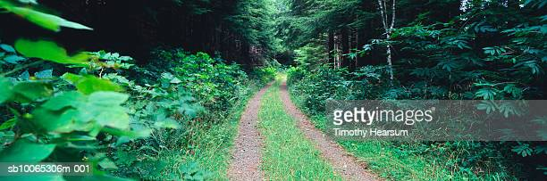 dirt road through green forest - timothy hearsum stock-fotos und bilder
