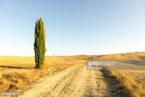 dirt road through landscape, tuscany, italy - cypress tree stock pictures, royalty-free photos & images