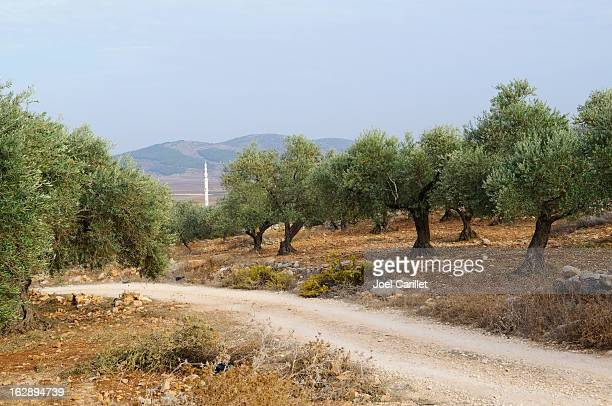 dirt road through olive grove in zababdeh, west bank - historical palestine stock pictures, royalty-free photos & images