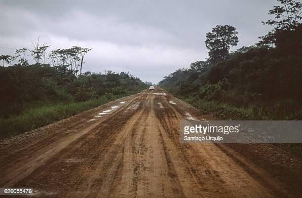Dirt road through the Amazon rainforest