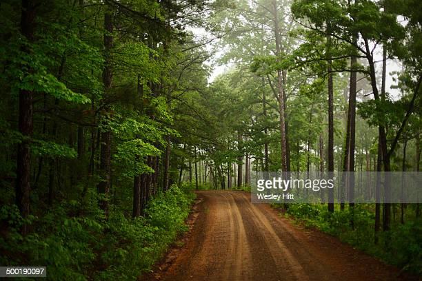Dirt road through the Ozark Mountains of Arkansas
