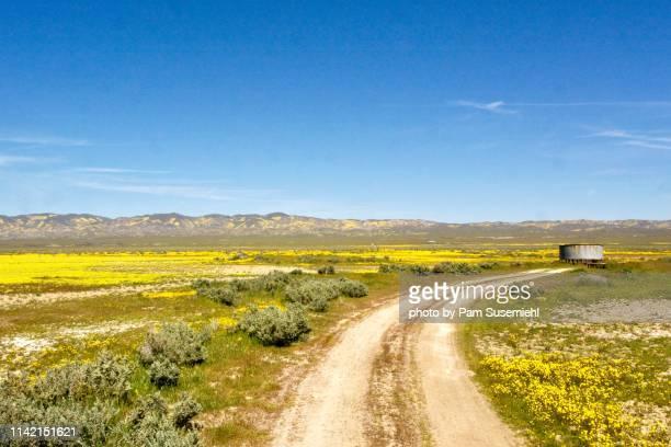 dirt road through yellow wildflower superbloom - hügelkette stock-fotos und bilder