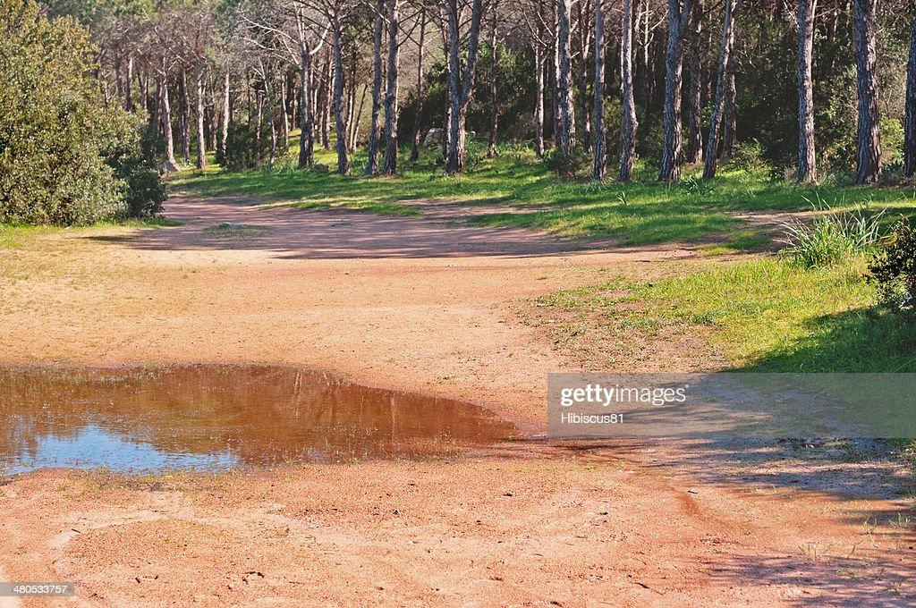 dirt road to Cala Brandinchi : Bildbanksbilder