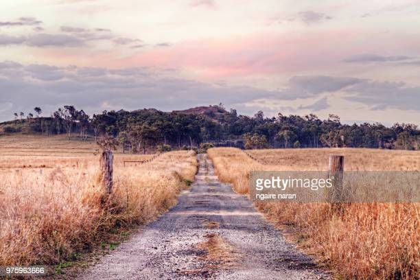 dirt road to forest, darling downs, australia - country road stock pictures, royalty-free photos & images