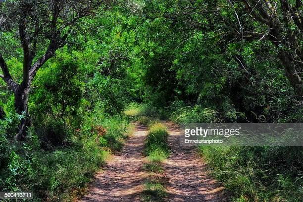 dirt road under trees and bush - emreturanphoto bildbanksfoton och bilder