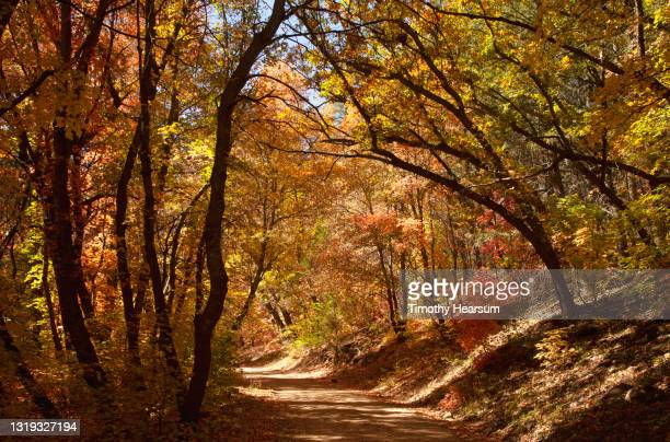 dirt road winds through a forest of colorful fall foliage - timothy hearsum photos et images de collection