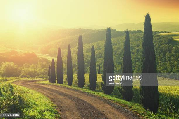 Dirt road with cypress trees in Tuscany, Italy