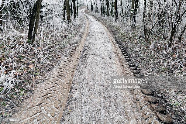 Dirt road with hoar frost, Waschberg, Leitzersdorf, Weinviertel or Wine Quarter, Lower Austria, Austria