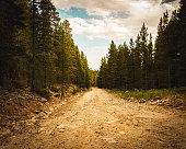 Dirt road with trees and sky with clouds