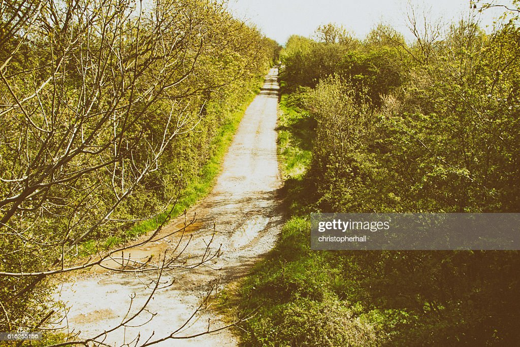 Dirt road with trees on either side : Stock Photo