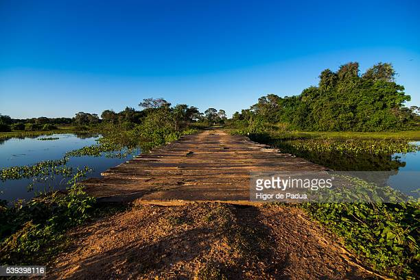 dirt roads and wooden bridges the wetland landscape - animal selvagem stock pictures, royalty-free photos & images