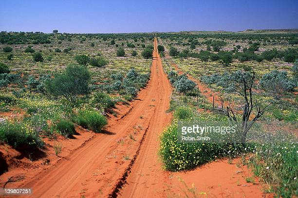 Dirt track in desert with wildflowers, Deep Well Range area, NT