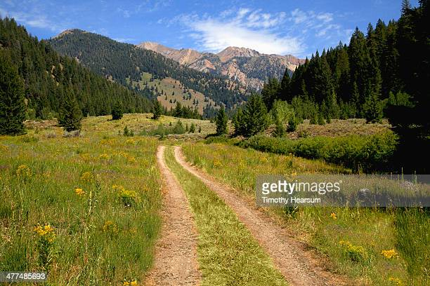 dirt track road through field of wildflowers - sun valley idaho stock photos and pictures