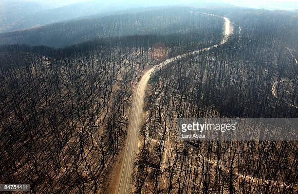 Dirt track runs through the burnt out forest in the Kinglake region on February 12, 2009 in Melbourne, Australia. Victoria Police have revised the...