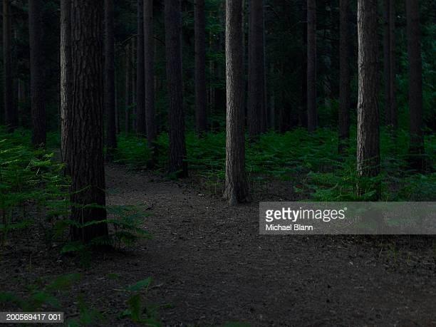 Dirt track through forest