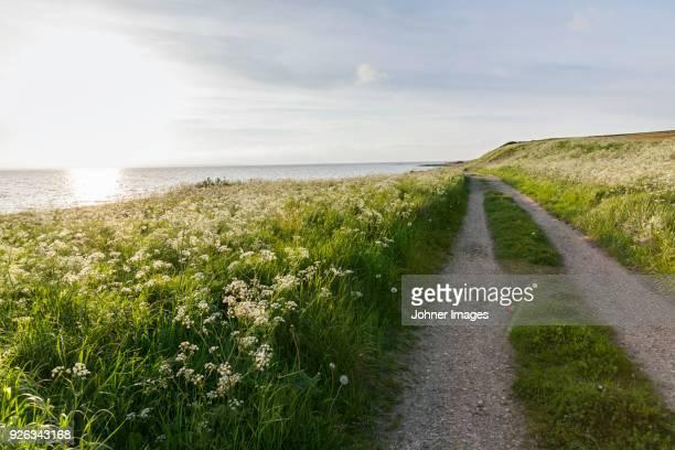Dirt track through meadow