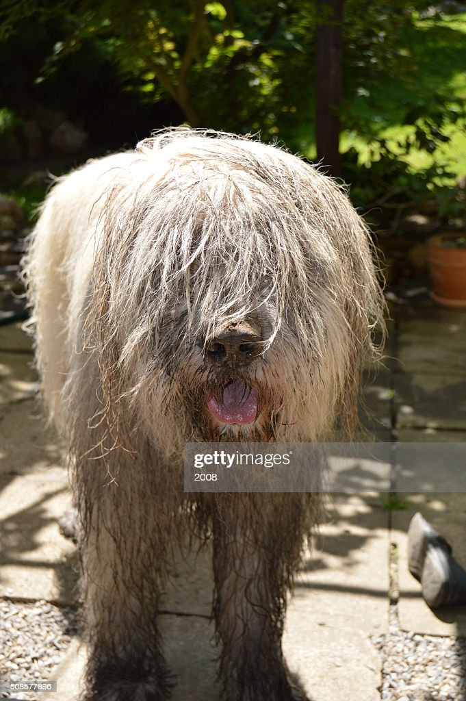 Dirty Hund : Stock-Foto