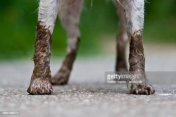 Dirty dog's four legs