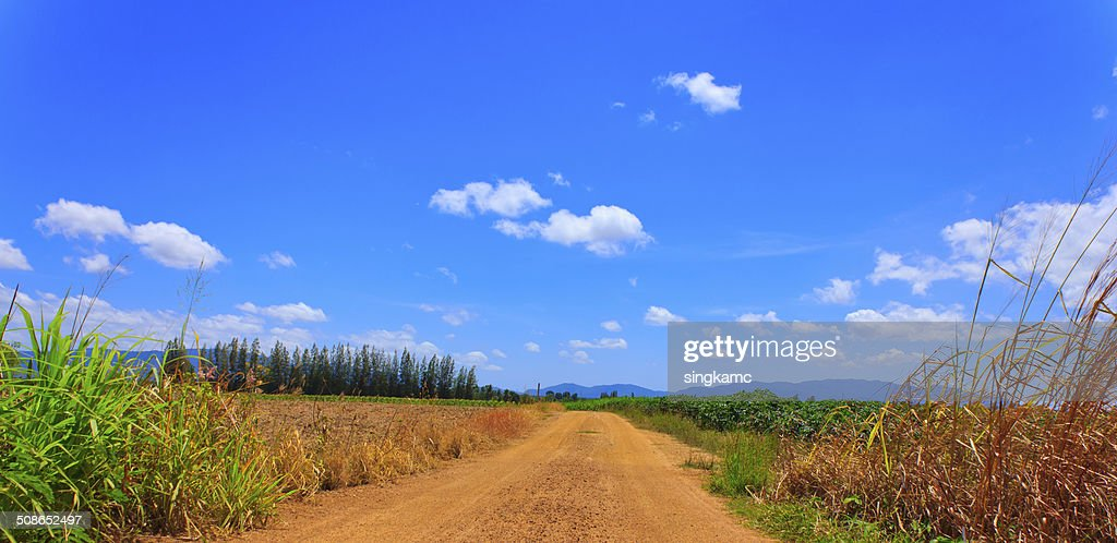dirty road near green and black field under cloudy sky : Stock Photo