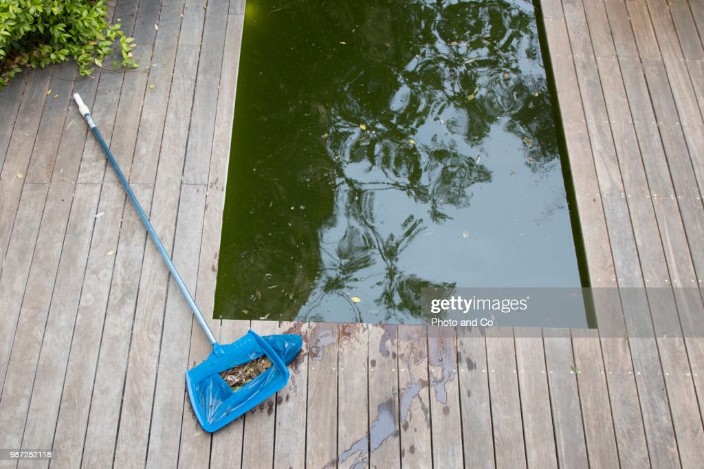 Dirty Water Pool Stock Photo - Getty Images